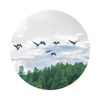 birds flying over beautiful pagosa springs